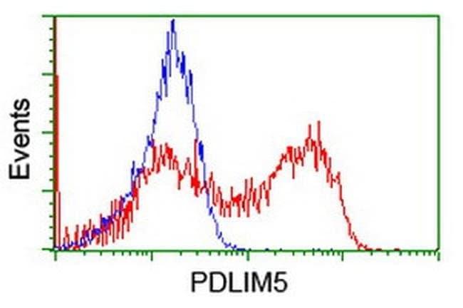 PDLIM5 Mouse anti-Human, Clone: OTI1A11, liquid, TrueMAB  100 µL;