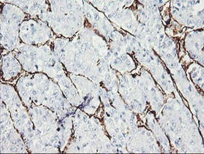 PECAM1 Mouse anti-Human, Clone: OTI1G6, liquid, TrueMAB  100 µL; Unconjugated