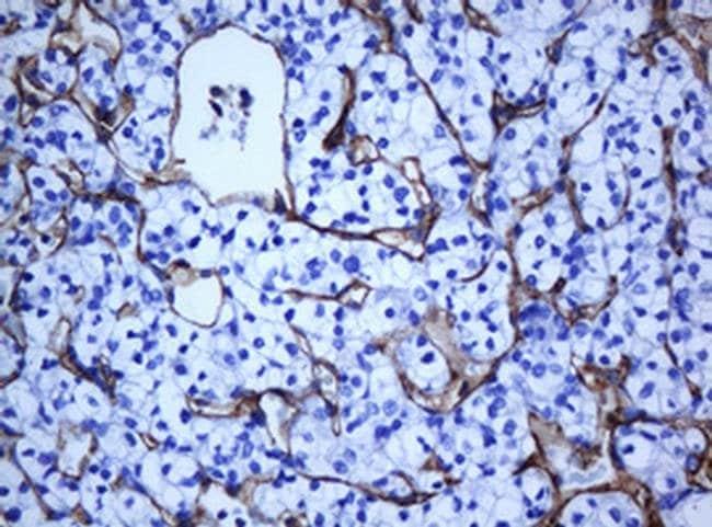 PECAM1 Mouse anti-Human, Clone: OTI1F9, liquid, TrueMAB  100 µL; Unconjugated