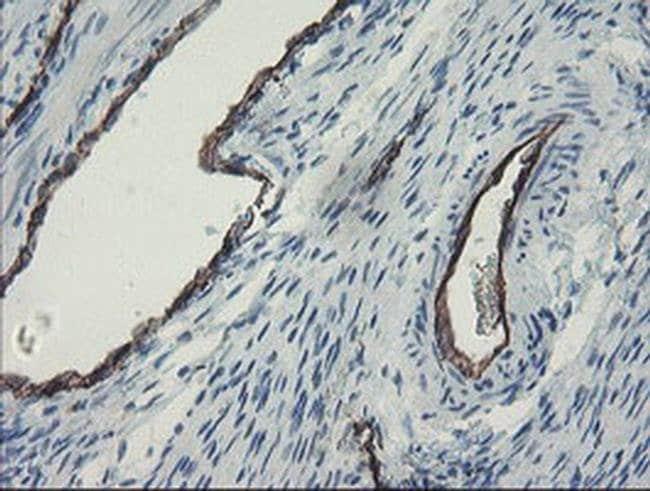 PECAM1 Mouse anti-Human, Clone: OTI3G4, liquid, TrueMAB  100 µL; Unconjugated