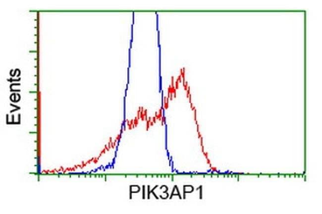 PIK3AP1 Mouse anti-Human, Clone: OTI1C3, liquid, TrueMAB  100 µL;