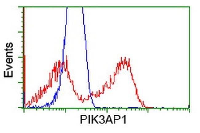 PIK3AP1 Mouse anti-Human, Clone: OTI5H2, liquid, TrueMAB  100 µL;