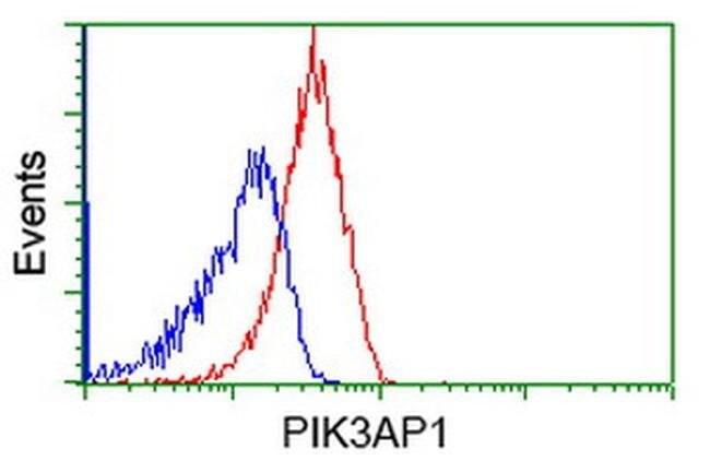 PIK3AP1 Mouse anti-Human, Rat, Clone: OTI6H6, liquid, TrueMAB  100 µL;