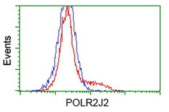 POLR2J2 Mouse anti-Human, Clone: OTI6E9, liquid, TrueMAB  100 µL;