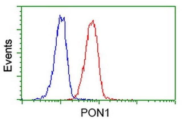 PON1 Mouse anti-Human, Clone: OTI2A6, liquid, TrueMAB  100 µL; Unconjugated