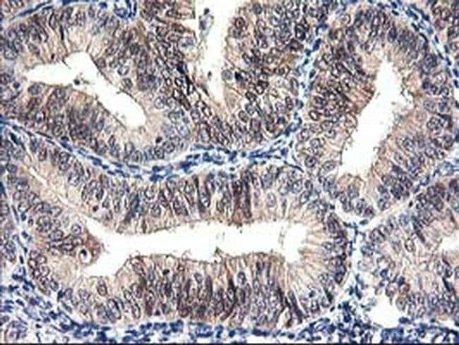 PRMT2 Mouse anti-Human, Clone: OTI3A3, liquid, TrueMAB  100 µL; Unconjugated