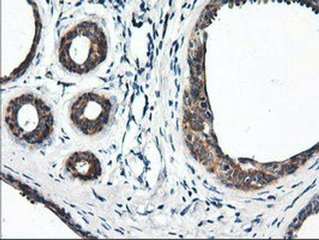 RGS16 Mouse anti-Human, Clone: OTI1D3, liquid, TrueMAB  100 µL; Unconjugated