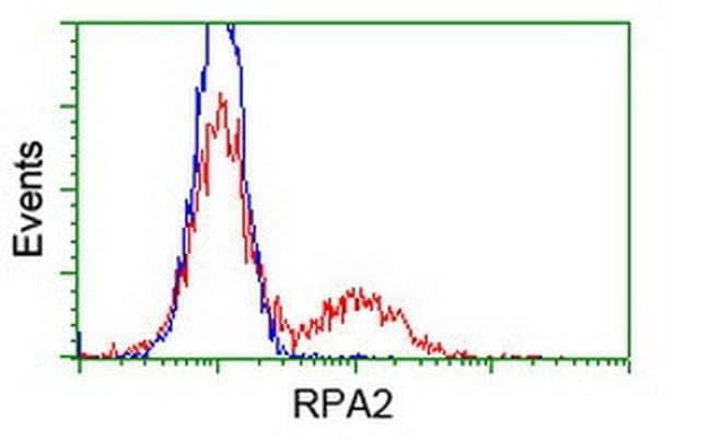 RPA2 Mouse anti-Human, Clone: OTI10G1, liquid, TrueMAB  100 µL; Unconjugated
