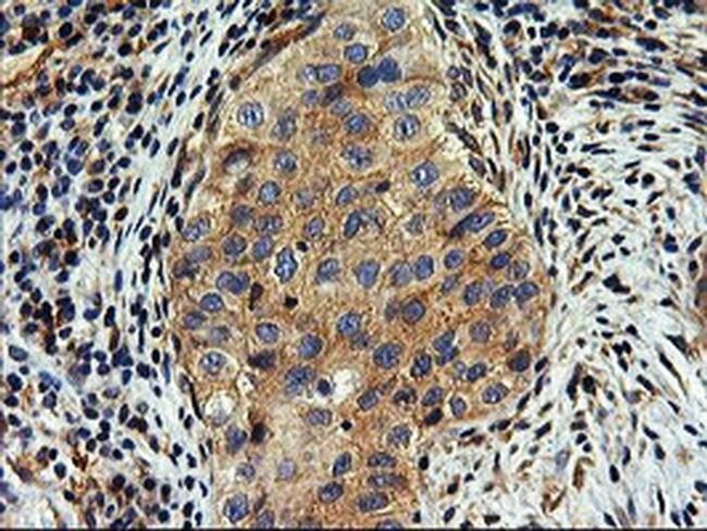 SNX8 Mouse anti-Human, Clone: OTI3C4, liquid, TrueMAB  100 µL; Unconjugated