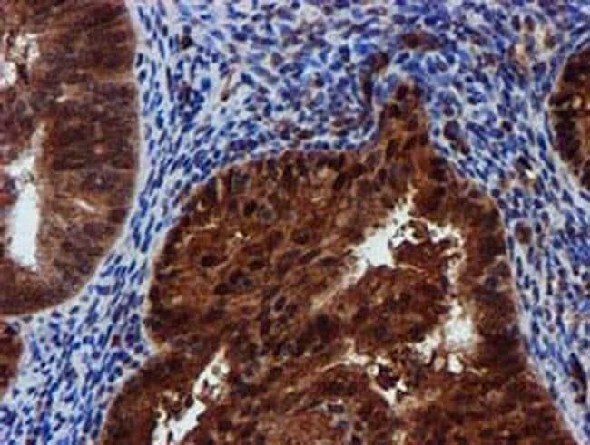 SPR Mouse anti-Human, Clone: OTI2C6, liquid, TrueMAB  100 µL; Unconjugated