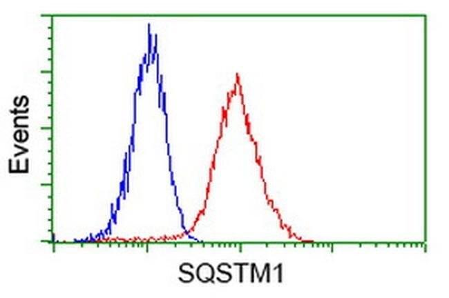 SQSTM1 Mouse anti-Human, Clone: OTI4C8, liquid, TrueMAB  100 µL; Unconjugated