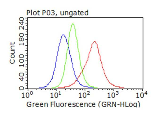 SQSTM1 Mouse anti-Human, Clone: OTI1B2, liquid, TrueMAB  100 µL; Unconjugated
