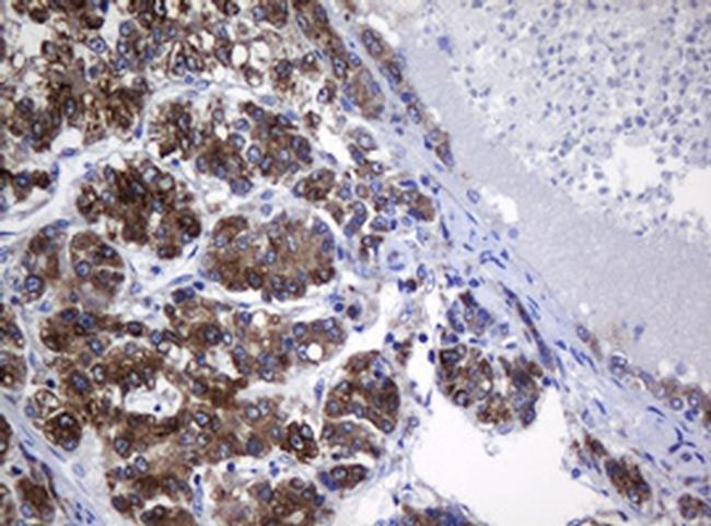 SRPRB Mouse anti-Human, Clone: OTI2D7, liquid, TrueMAB  100 µL; Unconjugated