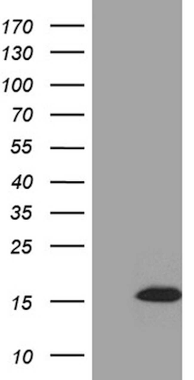 STH Mouse anti-Human, Clone: OTI7A12, lyophilized, TrueMAB  100 µg;