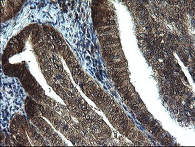 TBCC Mouse anti-Human, Mouse, Rat, Clone: OTI4C4, liquid, TrueMAB  100