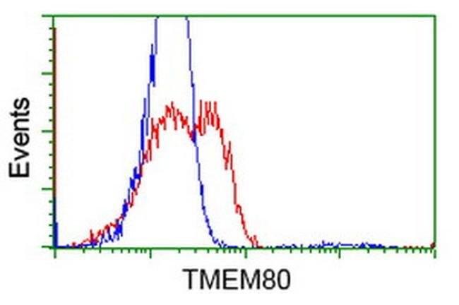 TMEM80 Mouse anti-Human, Clone: OTI3B6, liquid, TrueMAB  100 µL; Unconjugated