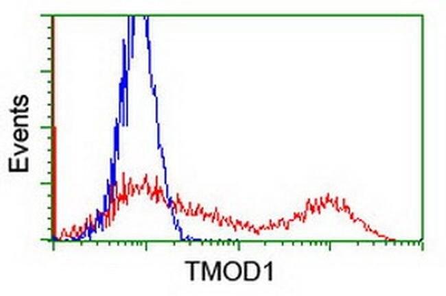 TMOD1 Mouse anti-Human, Clone: OTI3B12, liquid, TrueMAB  100 µL; Unconjugated