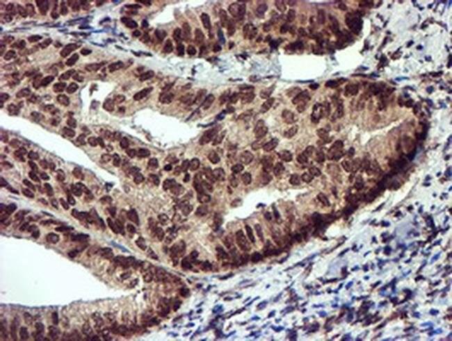 TOMM34 Mouse anti-Human, Clone: OTI1G7, liquid, TrueMAB  100 µL; Unconjugated
