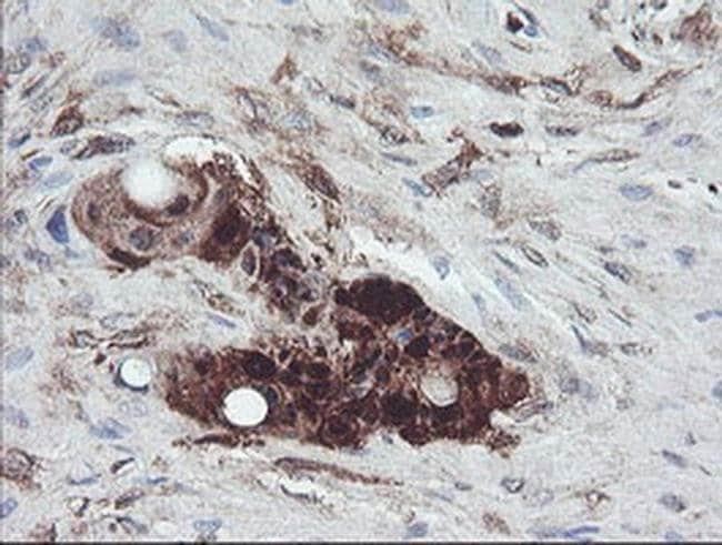 TSC22D1 Mouse anti-Human, Clone: OTI1A5, liquid, TrueMAB  100 µL;