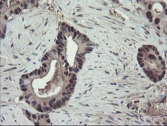 TSC22D1 Mouse anti-Human, Clone: OTI4H8, liquid, TrueMAB  100 µL;