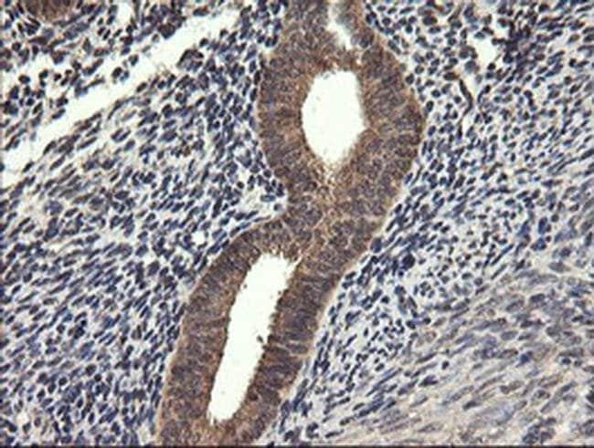 UBE2G2 Mouse anti-Canine, Human, Mouse, Rat, Clone: OTI5F1, liquid, TrueMAB