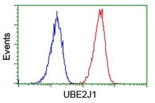 UBE2J1 Mouse anti-Human, Clone: OTI2G2, liquid, TrueMAB  100 µL; Unconjugated