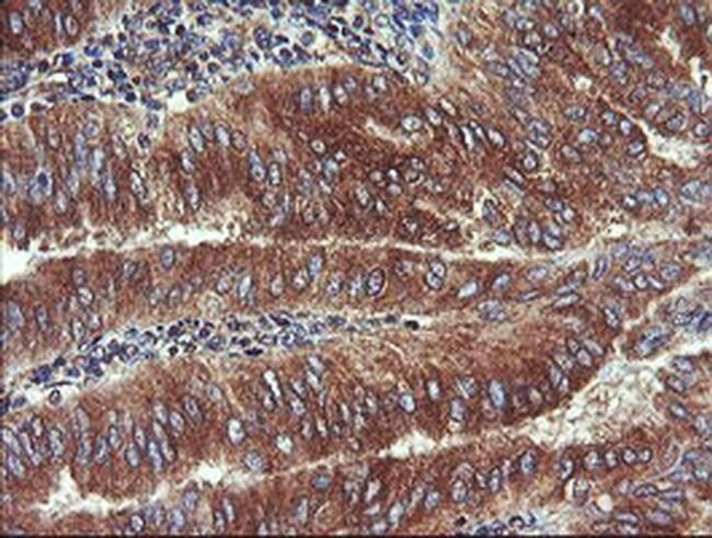 UBE2J1 Mouse anti-Human, Clone: OTI1F6, liquid, TrueMAB  100 µL; Unconjugated