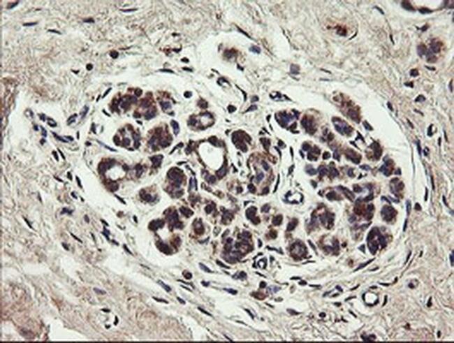 UBE2J1 Mouse anti-Canine, Human, Mouse, Rat, Clone: OTI3D1, liquid, TrueMAB
