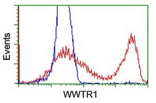 WWTR1 Mouse anti-Canine, Human, Mouse, Clone: OTI1A12, liquid, TrueMAB