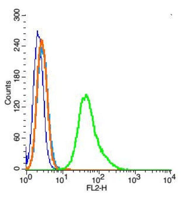 Ezrin Rabbit anti-Human, Polyclonal, Bioss  100 µL; Unconjugated