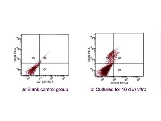 CD34 Rabbit anti-Human, Polyclonal, Bioss  100 µL; Unconjugated