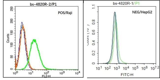 CD45 Rabbit anti-Human, Polyclonal, Bioss  100 µL; Unconjugated