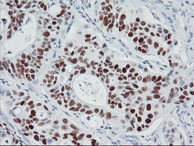 p53 Mouse anti-Human, Clone: OTI3A6, liquid, TrueMAB  100 µL; Unconjugated