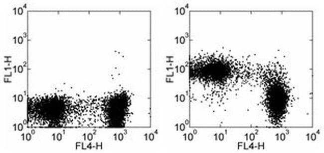CD43 Rat anti-Mouse, FITC, Clone: eBioR2/60, eBioscience ::