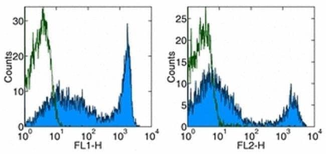 CD90.2 (Thy-1.2) Rat anti-Mouse, FITC, Clone: 53-2.1, eBioscience ::
