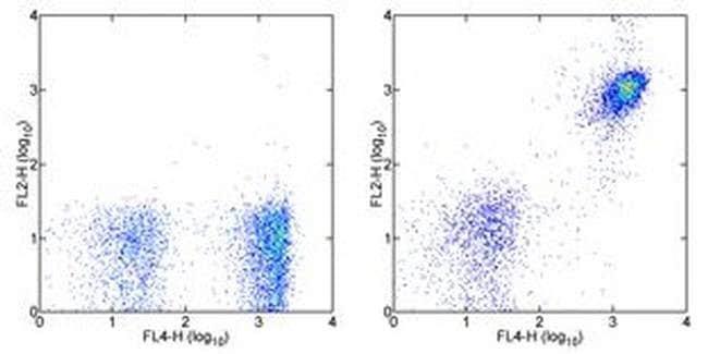 CD19 Rat anti-Mouse, PE, Clone: eBio1D3 (1D3), eBioscience™ 50 μg; PE CD19 Rat anti-Mouse, PE, Clone: eBio1D3 (1D3), eBioscience™