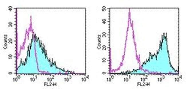 CD86 (B7-2) Rat anti-Mouse, PE, Clone: GL1, eBioscience™ 50 μg; PE CD86 (B7-2) Rat anti-Mouse, PE, Clone: GL1, eBioscience™