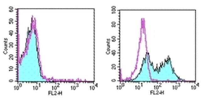 CD137 (4-1BB) Syrian Hamster anti-Mouse, PE, Clone: 17B5, eBioscience ::