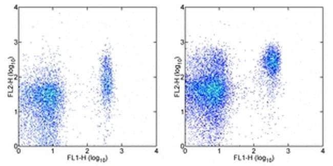 CD197 (CCR7) Rat anti-Mouse, PE, Clone: 4B12, eBioscience™ 100 μg; PE CD197 (CCR7) Rat anti-Mouse, PE, Clone: 4B12, eBioscience™