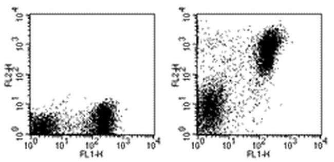 MHC Class II (I-A/I-E) Rat anti-Mouse, PE, Clone: M5/114.15.2, eBioscience
