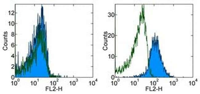 OVA257-264 (SIINFEKL) peptide bound to H-2Kb Mouse anti-Mouse, PE, Clone: eBio25-D1.16 (25-D1.16), eBioscience™ 100 μg; PE OVA257-264 (SIINFEKL) peptide bound to H-2Kb Mouse anti-Mouse, PE, Clone: eBio25-D1.16 (25-D1.16), eBioscience™