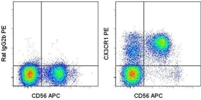CX3CR1 Rat anti-Human, PE, Clone: 2A9-1, eBioscience ::
