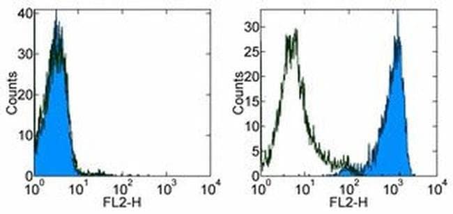 CD254 (RANK Ligand) Mouse anti-Human, PE, Clone: MIH24, eBioscience™ 25 μg; PE CD254 (RANK Ligand) Mouse anti-Human, PE, Clone: MIH24, eBioscience™