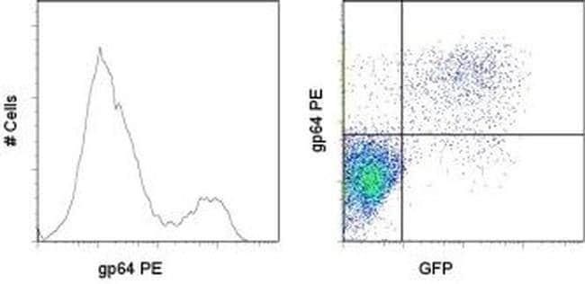 Baculovirus Envelope gp64 Mouse anti-Virus, PE, Clone: AcV1, eBioscience™ 100 μg; PE Baculovirus Envelope gp64 Mouse anti-Virus, PE, Clone: AcV1, eBioscience™