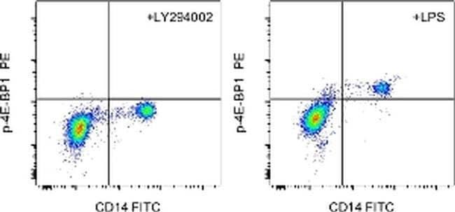 Phospho-4EBP1 (Thr36, Thr45) Mouse anti-Human, Mouse, PE, Clone: V3NTY24,