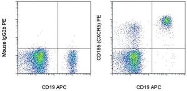 CD185 (CXCR5) Mouse anti-Human, Non-human primate, Rhesus Monkey, PE, Clone: MU5UBEE, eBioscience™ 25 Tests; PE CD185 (CXCR5) Mouse anti-Human, Non-human primate, Rhesus Monkey, PE, Clone: MU5UBEE, eBioscience™