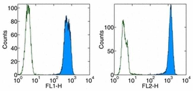 PCNA Mouse anti-Human, Mouse, Rat, PE, Clone: PC10 (3F81), eBioscience