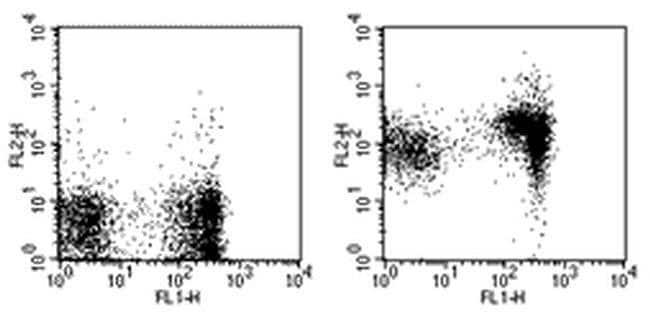 CD1d Rat anti-Mouse, Biotin, Clone: 1B1, eBioscience™ 500 μg; Biotin CD1d Rat anti-Mouse, Biotin, Clone: 1B1, eBioscience™