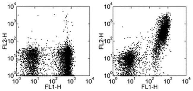 CD21/CD35 Rat anti-Mouse, Biotin, Clone: eBio8D9 (8D9), eBioscience™ 100 μg; Biotin CD21/CD35 Rat anti-Mouse, Biotin, Clone: eBio8D9 (8D9), eBioscience™