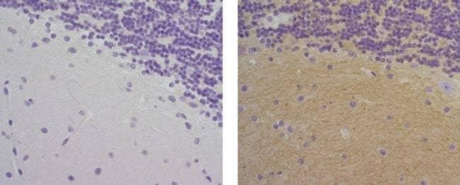 CD56 (NCAM) Mouse anti-Human, Biotin, Clone: 5tukon56, eBioscience Invitrogen